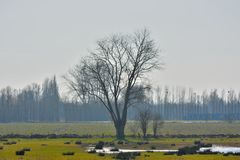 Beautiful tree on a field Royalty Free Stock Photography