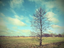 Beautiful tree in field Stock Photos