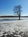 Single tree in flood field, Lithuania Royalty Free Stock Photography