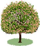 Beautiful tree with flowers Royalty Free Stock Photos