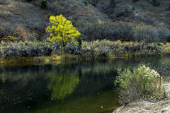 Beautiful Tree and flowers by the river Stock Photos