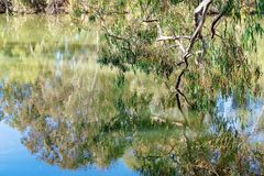 Still Water River Tree Reflections. Beautiful tree and foliage water reflections in a still river setting in Australia royalty free stock photography