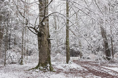 Beautiful tree in a forest during winter Stock Photos