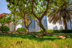 Beautiful tree. A tree in a garden in Dubai Stock Image