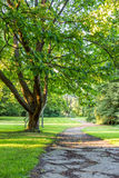 Beautiful tree in green park with pathway horizontal Stock Image