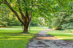 Beautiful tree in green park with pathway vertical Royalty Free Stock Photo