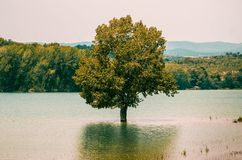 Beautiful tree growing inside the lake and reflected in the water