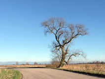 Beautiful tree and highroad Stock Photography