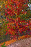 Beautiful tree on a hill in autumn. Royalty Free Stock Photo