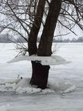 Tree with ice pieces after flood, Lithuania Royalty Free Stock Photos