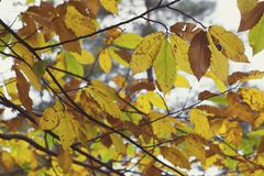 Beautiful Tree Leaves at Autumn Time royalty free stock image