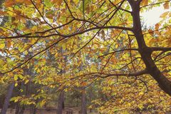 Beautiful Tree Leaves at Autumn Time royalty free stock photo