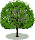 Beautiful tree with leaves Stock Image