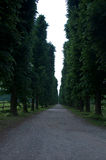 Beautiful tree-lined avenue with earth road Royalty Free Stock Photos