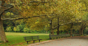 A beautiful tree-lined park path in New York City