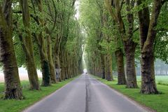 Beautiful tree-lined road Royalty Free Stock Photography