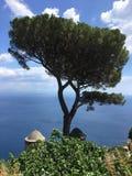 Beautiful tree in ravello italy on the amalfi coast. Beautiful tree on the Mediterranean sea at ravello italy on the amalfi coast Stock Images