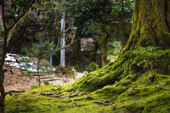 Beautiful tree with moss. Close up of beautiful rtree with moss cover on moutain in kaga city japan Stock Photo