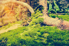 Beautiful tree with moss cover. Nature green wood sunshine backg. Pretty nature background. Closeup moss on rock with bright sunlight at daytime. Shallow depth Royalty Free Stock Photos