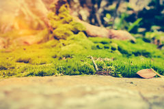 Beautiful tree with moss cover. Nature green wood sunshine backg. Pretty nature background. Closeup moss on rock with bright sunlight at daytime. Shallow depth Stock Images