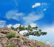 Beautiful tree in the mountains Stock Photos