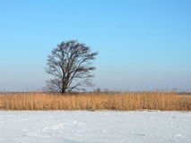Beautiful tree near river Royalty Free Stock Images
