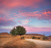 Beautiful tree near the road at colorful sunset at summer Stock Photo