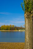 Beautiful tree next to a lake Stock Photo