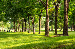 Beautiful tree in the park with warm light Stock Photography