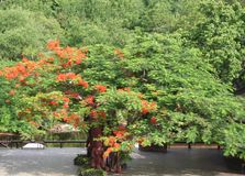 Beautiful tree in the Park zone, in Pattaya. Beautiful tree in the Park zone, in  Thailand. Buddha`s figure Stock Photos