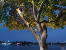 Beautiful tree photo at night with lights. royalty free stock photos