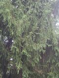 Beautiful Tree Stock Image
