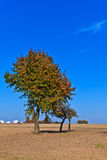 Beautiful tree in ploughed acre Royalty Free Stock Photos