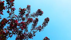Beautiful tree with red flowers. Beautiful tree with red flowers on the blue sky background Stock Image