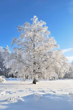 Beautiful tree in rime Royalty Free Stock Photos