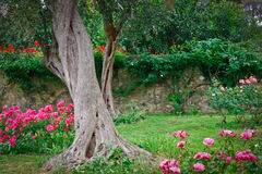 Beautiful tree in a rose garden Royalty Free Stock Images