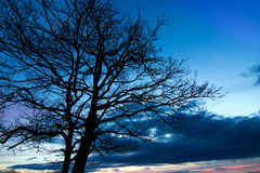 Beautiful tree silhouette Royalty Free Stock Photography