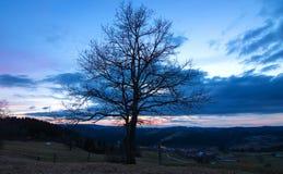 Beautiful tree silhouette Stock Photo