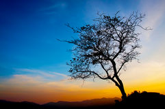 Beautiful tree silhouette and sunset blue sky Royalty Free Stock Photos