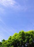 Beautiful Tree & Sky. A beautiful and colourful composition of a tree and the sky Royalty Free Stock Images