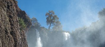 Beautiful tree on skyline above foaming waterfalls royalty free stock images