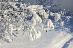 Beautiful tree in the snow. In Russia stock images