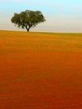 Beautiful Tree in solitude. Fantastique landscape in tree -Alentejo - Portugal Stock Photo