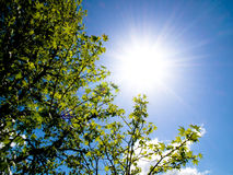 Beautiful tree and spring sun Stock Images