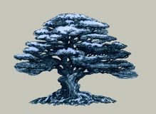 Bonsai tree, drawing. A beautiful tree in the style of a bonsai. Drawing for decoration. Deciduous, spreading, oriental plant Royalty Free Stock Photo