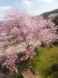 Beautiful Tree royalty free stock photo