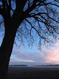 Beautiful  tree in sunrise, Lithuania Stock Image