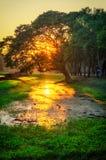 Beautiful tree at sunset Royalty Free Stock Photos