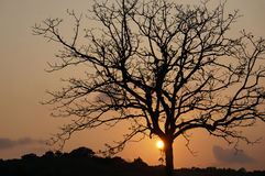 Beautiful tree at the sunset. Beautiful tree silhouette at the sunset sky Royalty Free Stock Photos