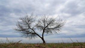 Beautiful tree time-lapse sky 4k. Video stock footage